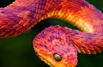Змеи: Разоблачаем 10 самых популярных мифов о них